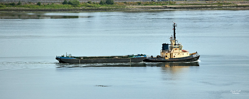 Seal Carr off Langbank - 9 July 2021
