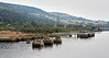 Former Carless Oil Terminal (Old Kilpatrick) River Clyde - 3 September 2014