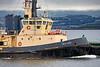 Seal Carr off Port Glasgow - 23 June 2021