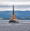 Seal Carr off Greenock - 23 June 2021