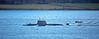 Astute Class Submarine off Kilcreggan - 14 January 2016