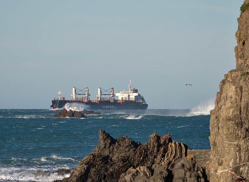'CS Celeste' arriving at Wellington, 11 June 2020