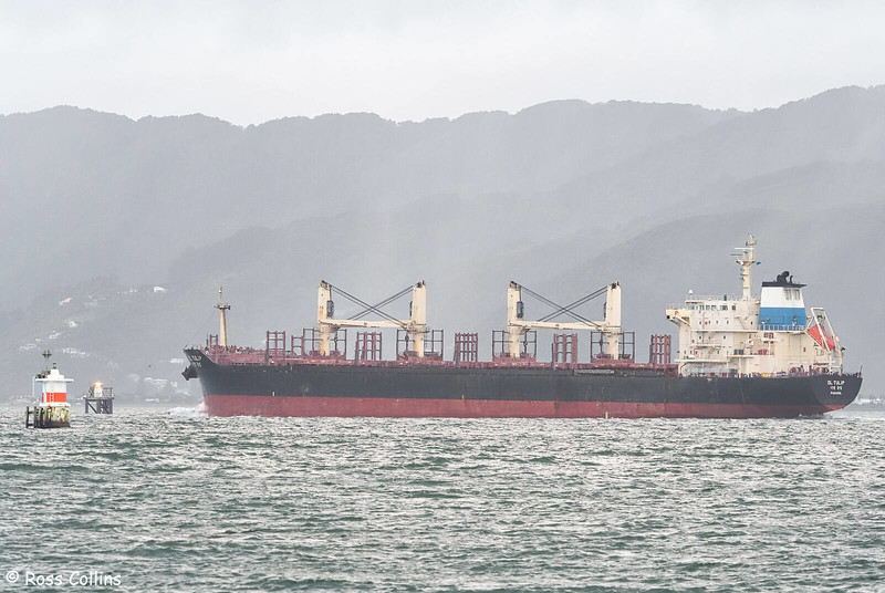 'DL Tulip' arriving at Wellington, 4 May 2020