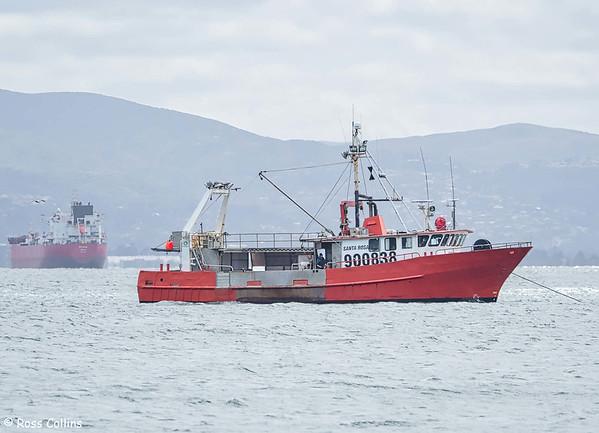 'Santa Rosa' anchored off Seatoun Beach, Wellington, 8 October 2020