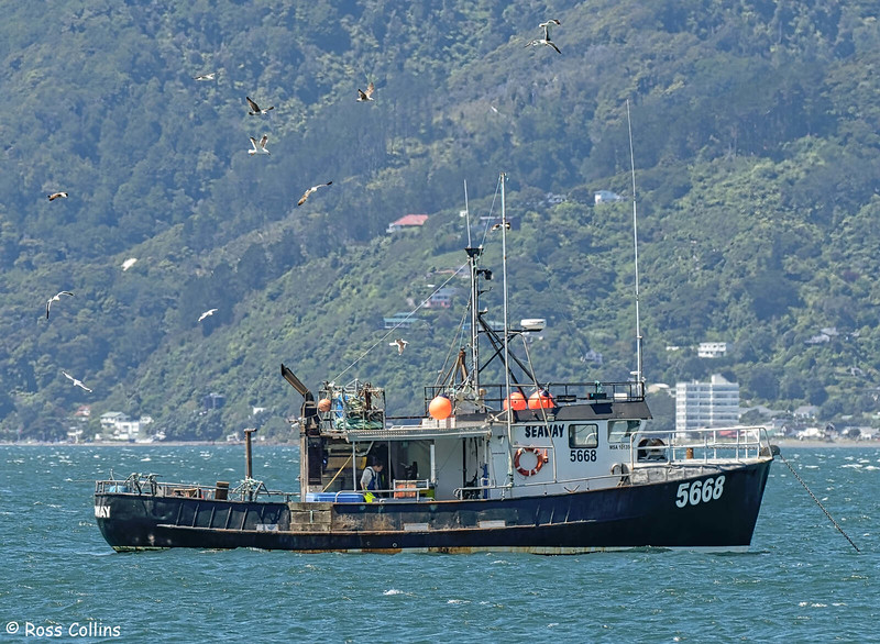 'Seaway' anchored at Worser Bay, 30 November 2020