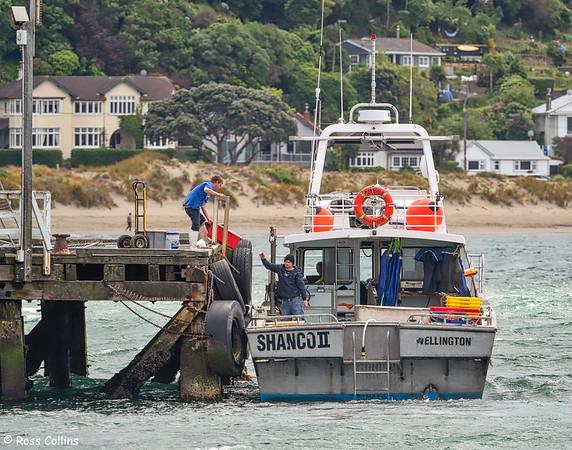 'Shanco II' at Seatoun Wharf, Wellington, 16 November 2020