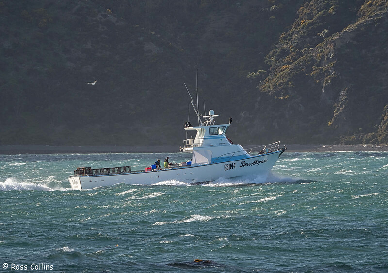 'Steve Mayree' departing from Wellington Harbour, 22 September 2020
