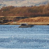 The Clydelink passenger ferry Silver Swan crossing the River Clyde between Renfrew Ferry and Yoker Ferry. Taken from the Clyde Walkway at Renfrew