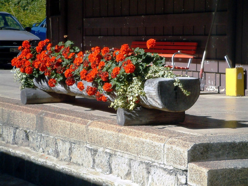 Lungern station flowers