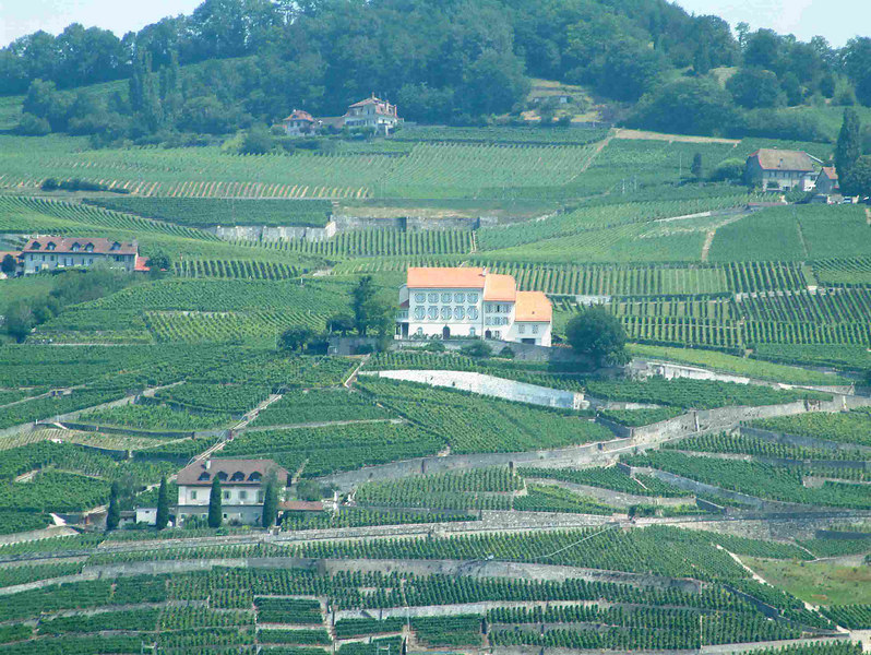 The Dezaley vineyards of Lavaux - on the northern shore of the lake of Geneva  between Lausanne and Vevey