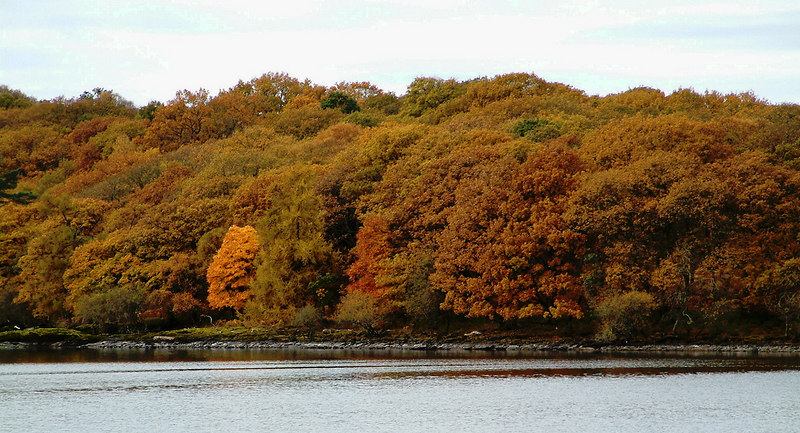 The 'bonny, bonny banks of Loch Lomond' were particularly awesome that fine late autumn day.