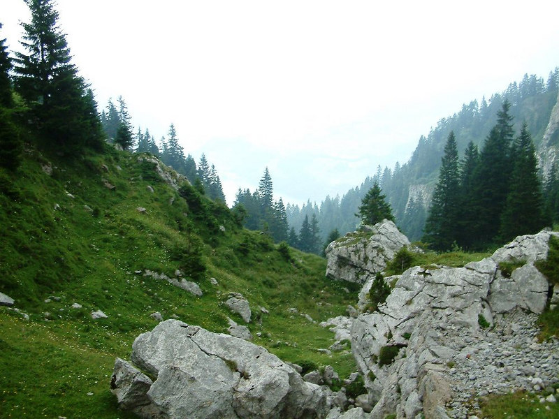 Rocks and trees of Pilatus
