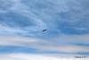 USCG 6586 Aerospatiale HH-65 Dauphin San Pedro 17-04-2017 14-23-26