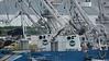 ITSAS TXORI & TXORI BERRI & IZURDIA Fishing Trawlers Victoria Mahé 06-12-2017 08-06-09