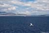 Distant BLUE STAR PAROS inbound Piraeus PDM 19-06-2017 12-36-30