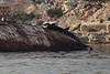 RASA SAYANG Wreck 2 Slipper Workboats Salamis PDM 19-10-2015 07-41-41c