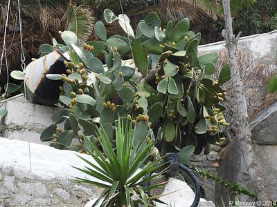 Cacti Hydra PDM 14-09-2018 12-03-57