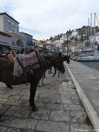 Donkeys Hydra PDM 14-09-2018 11-32-27