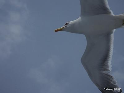 Seagull Saronic Gulf PDM 01-06-2015 10-14-56