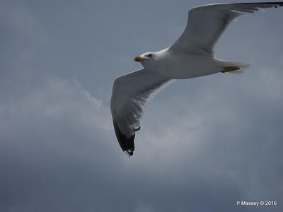 Seagull Saronic Gulf PDM 01-06-2015 10-14-55
