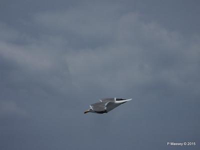 Seagull Saronic Gulf PDM 01-06-2015 10-16-004