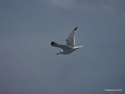Seagull Saronic Gulf PDM 01-06-2015 10-16-012