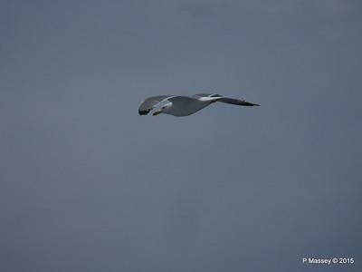 Seagull Saronic Gulf PDM 01-06-2015 10-16-11