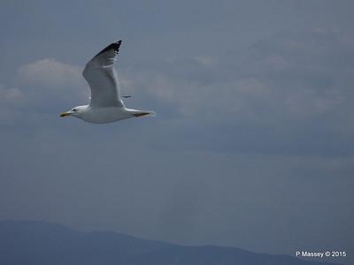 Seagull Saronic Gulf PDM 01-06-2015 10-16-20