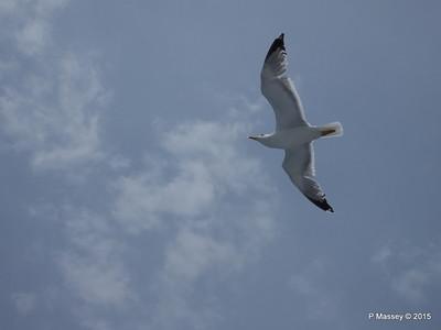 Seagull Saronic Gulf PDM 01-06-2015 10-14-049