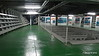 Aft Hold area ss HELLAS LIBERTY Piraeus PDM 30-10-2016 13-01-50