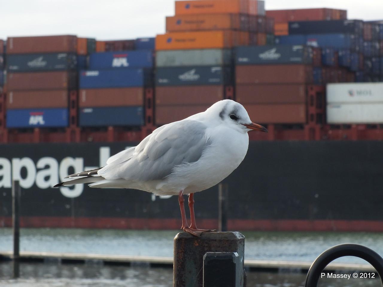 Seagull KYOTO EXPRESS 08-11-2012 10-59-02