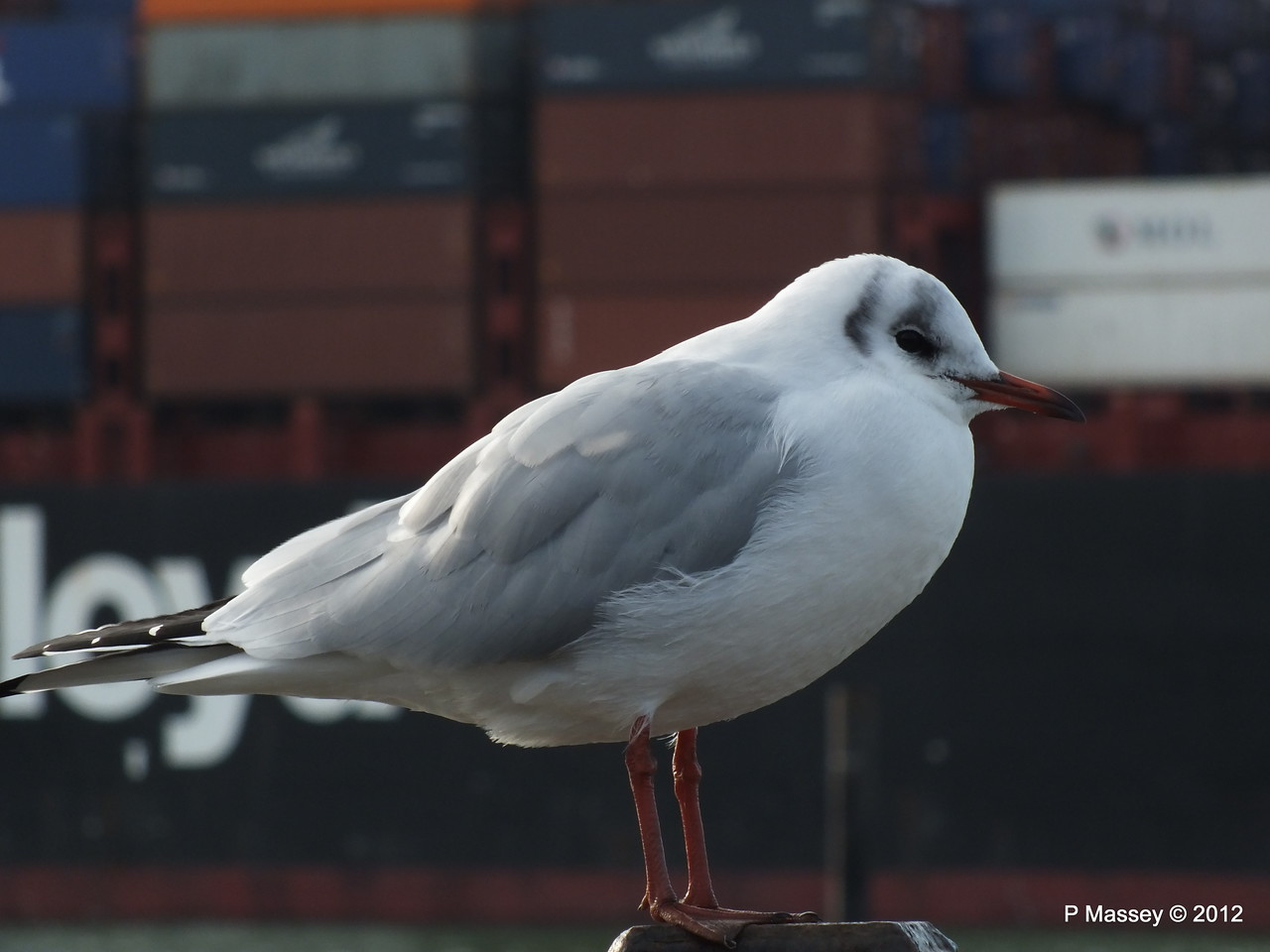 Seagull KYOTO EXPRESS 08-11-2012 10-59-06