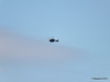 Helicopter PDM 29-06-2013 16-55-58