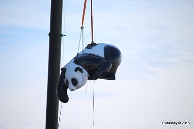 OVATION OF THE SEAS Raising Panda Southampton PDM 12-04-2016 15-21-044