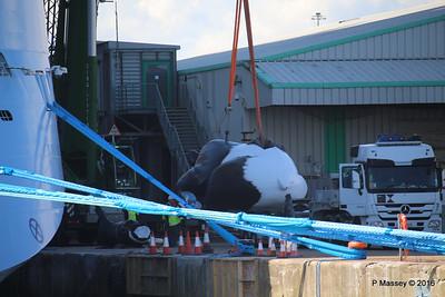 OVATION OF THE SEAS Raising Panda Southampton PDM 12-04-2016 15-04-19