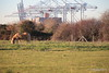 Horse 3 Foxes Marchwood PDM 29-11-2016 18-00-39