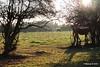Horses Marchwood PDM 29-11-2016 17-57-41