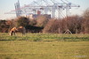 Horse 3 Foxes Marchwood PDM 29-11-2016 18-00-38
