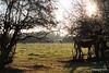 Horses Marchwood PDM 29-11-2016 17-57-31