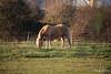 Horse Fox Marchwood PDM 29-11-2016 17-58-45