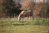 Horse Fox Marchwood PDM 29-11-2016 17-58-42