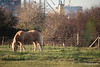 Horse 2 Foxes Marchwood PDM 29-11-2016 17-59-01