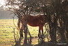 Horse Marchwood PDM 29-11-2016 17-57-38