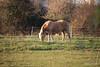 Horse Fox Marchwood PDM 29-11-2016 17-58-43