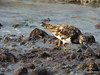 Marchwood Sandpipers Southampton PDM 09-09-2014 18-00-19