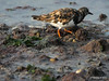 Marchwood Sandpipers Southampton PDM 09-09-2014 18-00-024