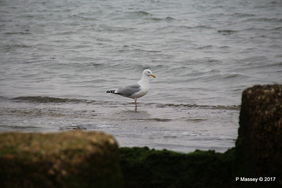 Seagull Cracknore Marchwood PDM 11-02-2017 14-19-15