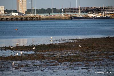 Egret & Seagulls Southampton PDM 22-07-2016 19-59-26
