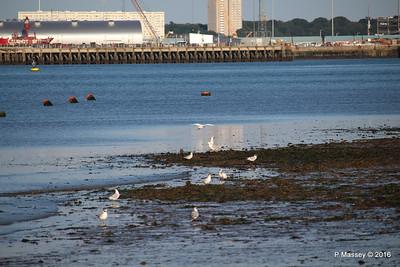 Egret & Seagulls Southampton PDM 22-07-2016 19-59-23