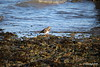 Turnstone Marchwood PDM 03-10-2016 16-52-54